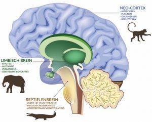 Neuro emotionele integratie